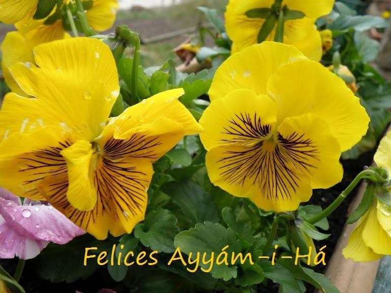 CELEBRACIÓN DE AYYAM-I-HÁ